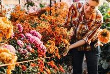 Flower Farming / Flower farming tips, beautiful shots and my dreams for a large flower farm one day!
