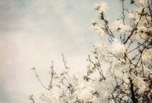 Art :: Photography / Swoon-worthy photographs by favorite photographers on Etsy.