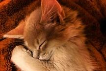 Cat - Kitten / by Kaorin *