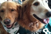 Spartan Dawgs and other pet fans / Is your pet MSU's No. 1 fan? Submit your photos to msuathletics@gmail.com.  / by Michigan State Spartans