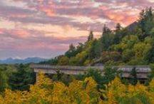 Fall for Fall / In North Carolina, gorgeous fall color comes in many forms. See brilliant red, yellow and orange foliage throughout the mountains and Piedmont from the first weeks of October through early November. Catch glimmers of gold, silver and blue in the fish that swim our coast and inland rivers well into late fall. And enjoy the sights, sounds and flavors of dozens of festivals and events happening statewide each weekend throughout the season.