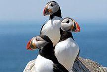Animals, Birds & Creatures / Animals, Birds and Other Creatures of Nature
