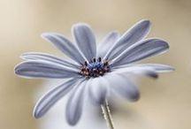 Petals / Beautiful Flowers