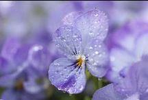 Violet / all shades of violet mood board