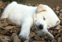 Cute Animals!