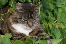 Gardening with Pets / Tips for keeping your pets safe both indoors and out!