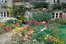 Cottage Gardens / Create your own cottage garden with these ideas. Perfect for cottage, English, romantic, flower and fairy tale gardens.