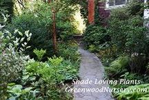 Shade Gardens / Gardening ideas and gardening plants that are perfect for shade gardens.