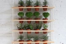 Vertical Gardening / Growing up! There are many ways to achieve vertical gardens. In limited space areas, plant tall slender plants to draw the eye upwards to create a feeling of more space. Grow plants on the sides of buildings, build planters, window boxes or the ideas we've collected here.