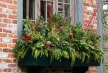 Window Box Gardens / The many ways of using small and large window boxes to make a big impact on looks. Check out our favorites!