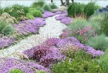 Drought Tolerant Landscapes / Planting ideas for water wise gardening, including drought tolerant garden plants. Landscape ideas for dry areas and those areas where watering is not possible.