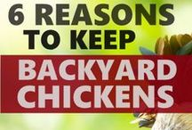 Keeping Chickens in the Garden / Ideas and tips for keeping chickens in the garden. You'll find articles and tips on chickens in the garden, keeping chickens and ducks and housing chickens, plus chicken coops for sale.