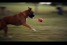 Dog Videos / The Dog Videos board is presented by Dog Play Date - a community for dog enthusiasts who want to hook up play groups and play dates for their dogs. Enjoy Dog Videos!