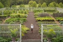 How does your garden grow? / by Megan Sajbel