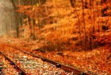 Autumn!!! / All things autumn/fall.