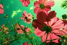 Flowers   / by Haley Springer