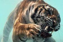 Animalssss / by Haley Springer
