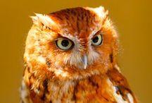 Owl / by Haley Springer