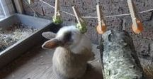Bunnies / Bunny and rabbits