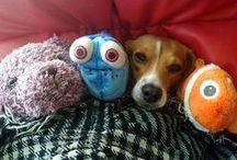 Companion dogs / Dog training  and devevelopmental purpose