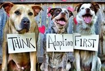 Rescue Pets! / Inspiration from pets and people saving lives.