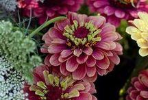 Flora / by Courtnye Koivisto