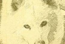 Dog Info / information