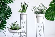PLANTS | Decorative Plant Life To Liven Any Room / Cacti, succulents, palms, green plants to add colour and decor to any room