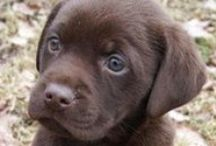 Puppy Love / by Diane Tochman