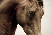 i love photography / by Melissa Kearney