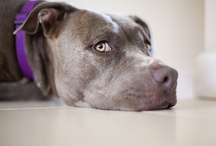 Must Love Dogs / Our best friends. / by montserrat r