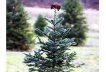 Holidays / Gift ideas, decorating tips and holiday-inspired photos.
