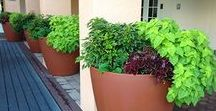 Our Customers / Commercial Self-Watering Planters