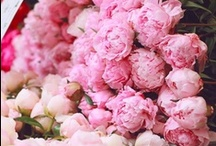 peonies / ...and Ranunculus and obviously some English Roses ;)