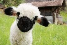 {Sheepies & Lambies}