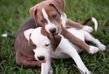 Puppy Love..... / by Debbie Brown