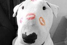 * BULL Terrier *