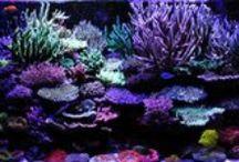 Reef Aquarium / by Debbie Brown