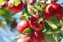 Apfelgarten TRINK APFELSTRUDEL / Aus Liebe zum Apfel.