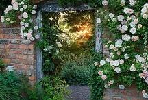 the secret garden / by fivEandfaRm | t. hoelle |