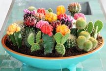 Cacti & Flora / by Keli Tayyeb