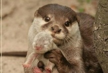 Inspirational Otter.com / Inspirational quotes, sayings and thoughts plus cute otter pics.