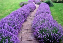 Gardens / by Cheryl Cummings Bagley