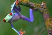 Frogs etc / by Cheryl Cummings Bagley