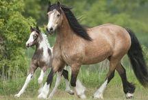 Horse Power / by Cheryl Cummings Bagley