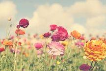 ...meadow...