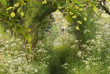 ...hedgerow...