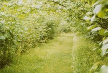 ...orchard...