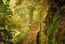 ...glorious glades...