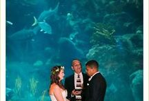 Florida Aquarium | Tampa / The Florida Aquarium is committed to bringing you the highest standards of quality in food, beverage and service. We are proud to offer a wide selection of delectable cuisine and are happy to create a customized menu to fit your needs.